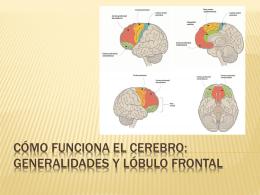 Cómo funciona el cerebro: generalidades y lóbulo frontal