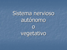 Sistema_nervioso_autónomo_o_vegetativo2009