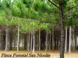 8. Finca Forestal San Nicolas. Nicaragua.