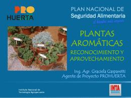 Plantas aromáticas – Córdoba