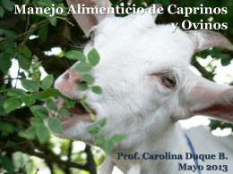 Manejo Alimenticio de ovinos y caprinos