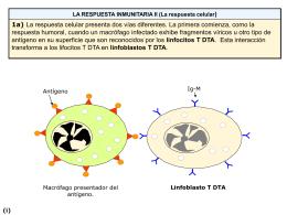Respuesta inmunitaria celular