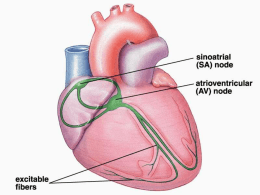 Anatomia - bionotas