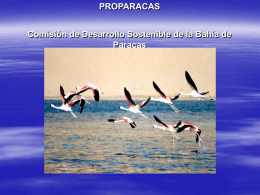 Comisión de Desarrollo Sostenible de la Bahía de Paracas