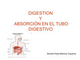 DIGESTION Y ABSORCIÓN EN EL TUBO DIGESTIVO