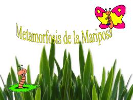 La mariposa y el gusano(metamorfosis)