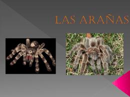 Las arañas - 56primariainfantes