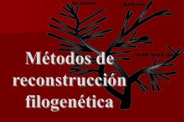 Presentación PowerPoint de los métodos de reconstrucción