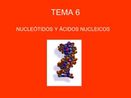 t.6. nucleotidos y acidos nucleicos