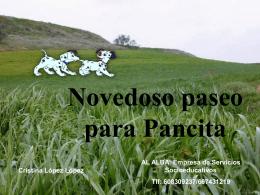 Novedoso paseo para Pancita