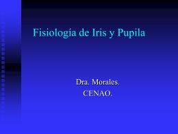 Fisiologia de iris y pupila