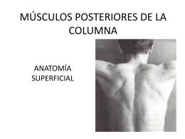 MÚSCULOS POSTERIORES DE LA COLUMNA