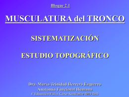 Musculatura del tronco: torax, abdomen y paredes musculares
