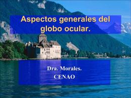 Generalidades del globo ocular