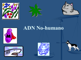 Non-human DNA in Forensics