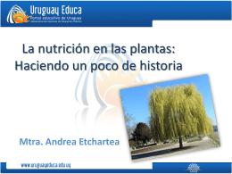 La nutrición en las plantas Haciendo un poco de