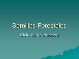 semillas-forestales1