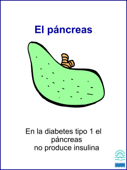 El páncreas - Diabetes at Work