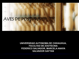 manejo de aves en postura - Universidad Autónoma de Chihuahua