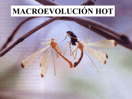 Macroevolucion_Hot_version_extendida_PT_2015