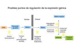 Regulación del inicio de la transcripción en eucariotas