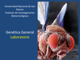 Genética General Laboratorio - Instituto de Investigaciones