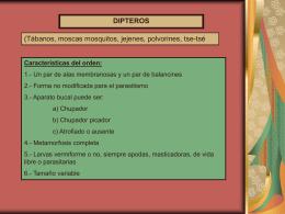 Moscas_y_otros_insectos