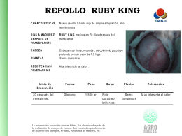 Repollo Ruby King Repollo_Ruby_King_F1