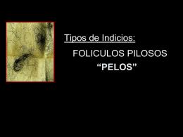 FOLICULOS PILOSOS