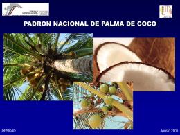 20050922 Palma de Coco