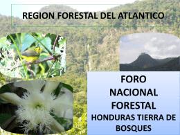 Sugerencias - Agenda Forestal Hondureña