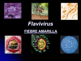 Flavivirus - eTableros