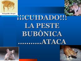 PESTE BUBONICA - Anibalagramonte