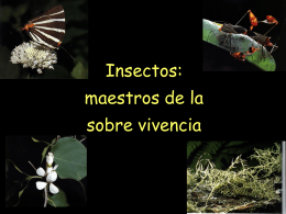 Insectos ecologia
