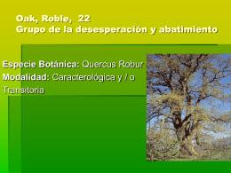 Oak, Roble, 22 Grupo de la desesperación