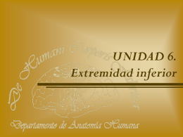 Extremidad Inferior. Conceptos Generales