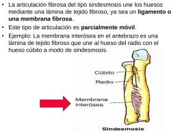 Sindesmosis