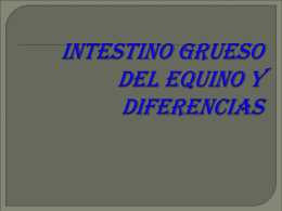 39 Intestino grueso y dif, en Eq
