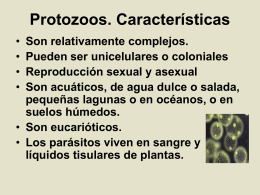 protozoos12