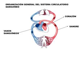 Sistema Crdiovascular