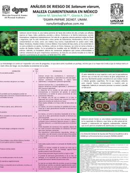 Solanum viarum - agricolaunam.org.mx