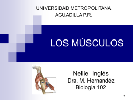 músculo - Nellie ingles