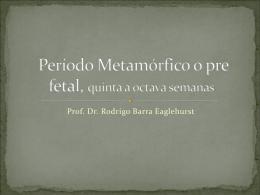 Clase IX Período Metamórfico o pre fetal, quinta a octava semanas