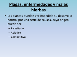 Plagas, enfermedades y malas hierbas
