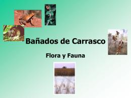 Bañados de Carrasco Flora y Fauna