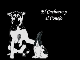 El cachorro y el conejo - Reflexiones Power Point