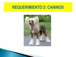 requerimiento 2-2013-i