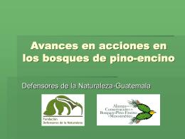 Avances en acciones en los bosques de pino-encino