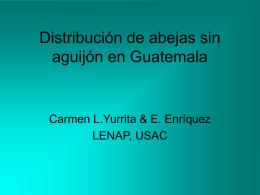 Distribución de abejas sin aguijón en Guatemala