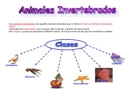 Invertebrados - lapaztercerciclo